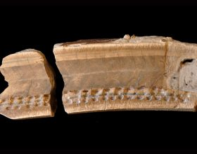 Ancient Fossilized Tooth Leads to New Findings About Belize